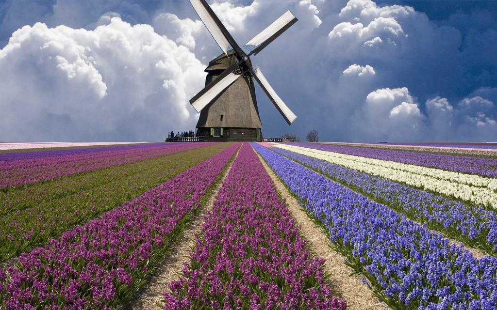 hollands-landschap-met-een-molen-en-een-veld-vol-bloemen-hd-molen-achtergrond