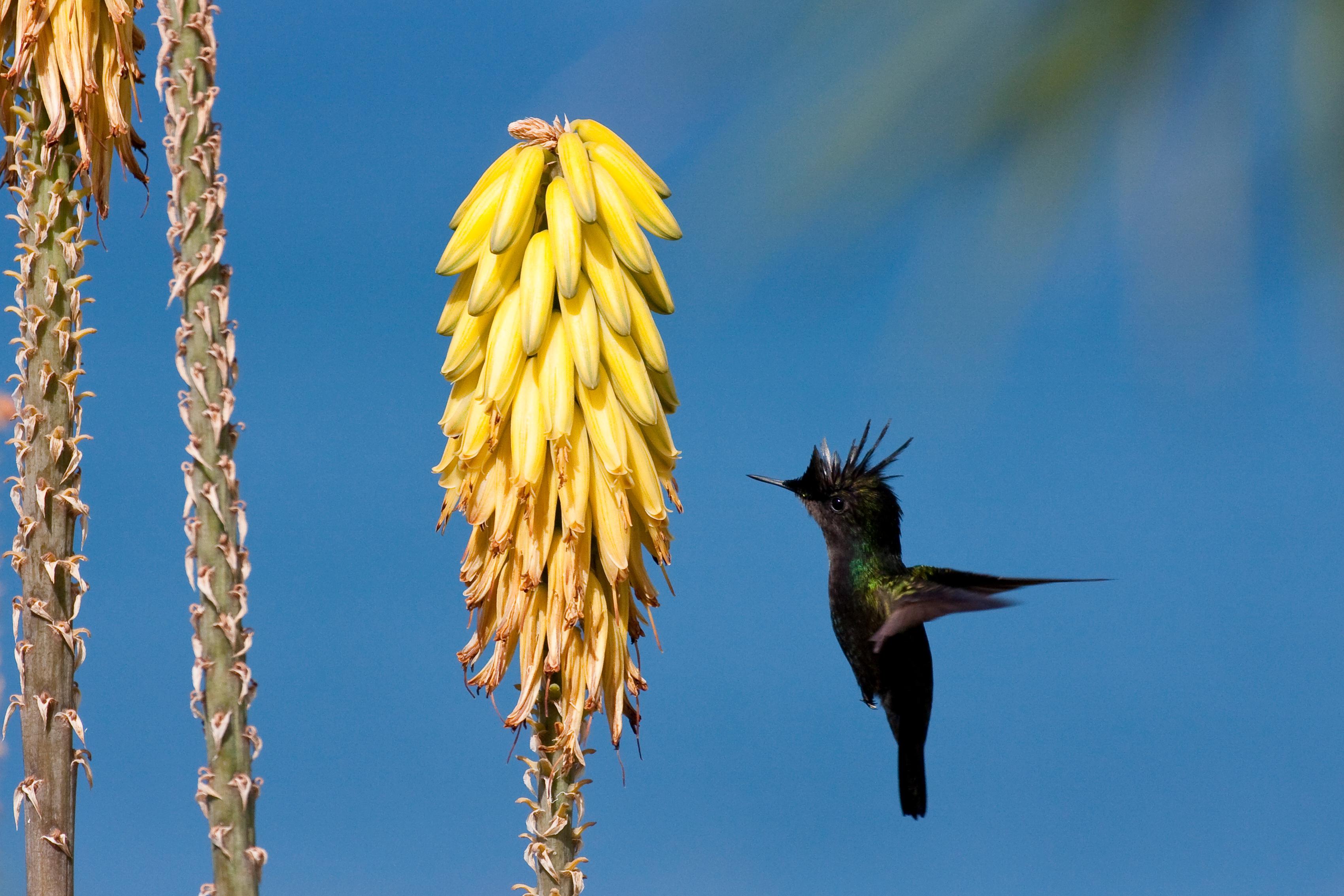 Afbeeldingsresultaat voor saba nature caribbean